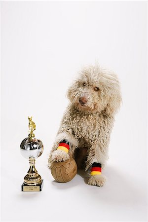 A Portuguese Waterdog with its foot on a soccer ball next to a trophy Stock Photo - Premium Royalty-Free, Code: 653-03459908
