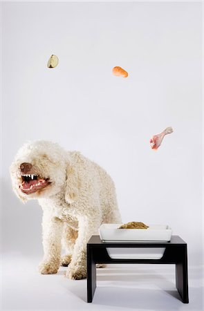 Food floating above a Portuguese Waterdog Stock Photo - Premium Royalty-Free, Code: 653-03459909