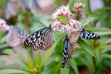 Butterfly Stock Photo - Premium Royalty-Free, Code: 669-08488501