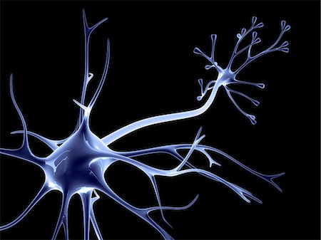 synapse - Nerve cell Stock Photo - Premium Royalty-Free, Code: 679-04249847