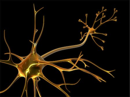 synapse - Nerve cell Stock Photo - Premium Royalty-Free, Code: 679-04249848