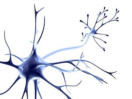 synapse - Nerve cell Stock Photo - Premium Royalty-Free, Code: 679-04249849