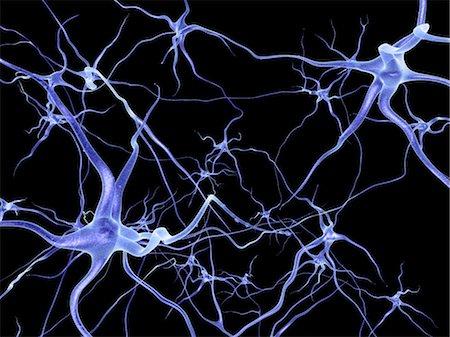 synapse - Neural network, computer artwork Stock Photo - Premium Royalty-Free, Code: 679-04249842