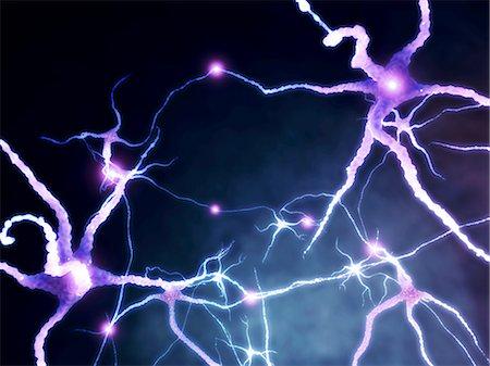 synapse - Neural network, computer artwork Stock Photo - Premium Royalty-Free, Code: 679-04249843