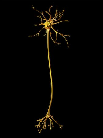 synapse - Nerve cell Stock Photo - Premium Royalty-Free, Code: 679-04249850