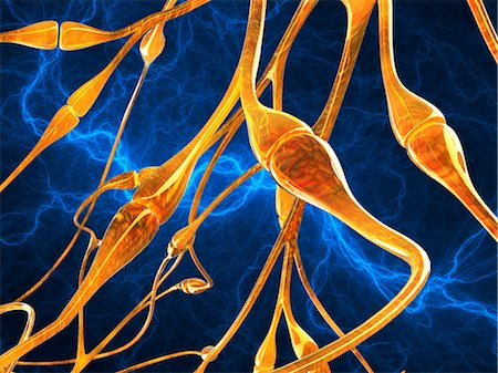synapse - Nerve synapses, artwork Stock Photo - Premium Royalty-Free, Code: 679-04250702