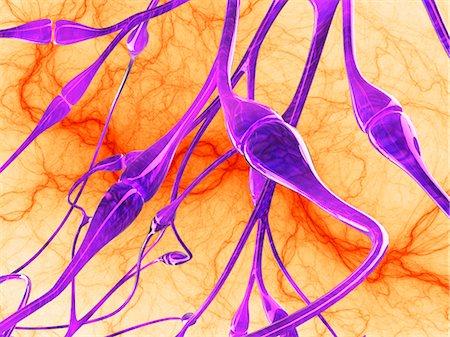 synapse - Nerve synapses, artwork Stock Photo - Premium Royalty-Free, Code: 679-04250703