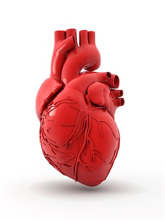 Heart with coronary vessels Stock Photo - Premium Royalty-Free, Code: 679-04250726