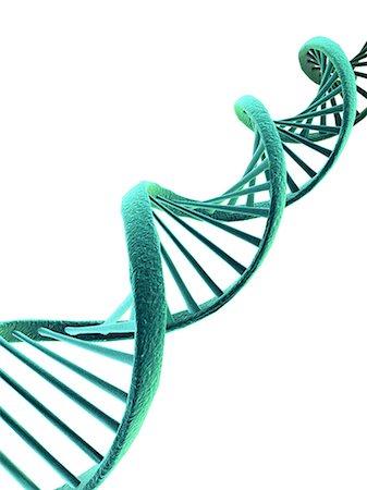 spiral - DNA, artwork Stock Photo - Premium Royalty-Free, Code: 679-05797108