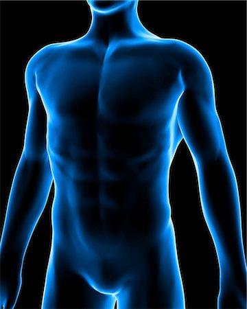 Human anatomy, artwork Stock Photo - Premium Royalty-Free, Code: 679-05797777