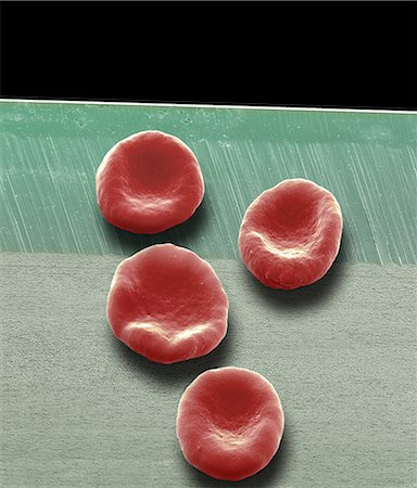 Red blood cells, SEM Stock Photo - Premium Royalty-Free, Code: 679-05797885