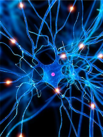 synapse - Nerve cell, artwork Stock Photo - Premium Royalty-Free, Code: 679-05798202
