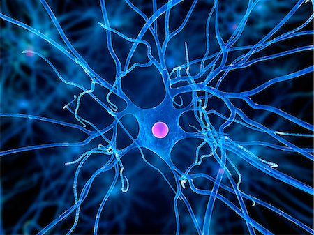 Nerve cell, artwork Stock Photo - Premium Royalty-Free, Code: 679-05798214