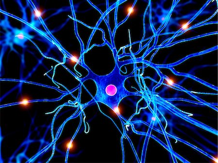 synapse - Nerve cell, artwork Stock Photo - Premium Royalty-Free, Code: 679-05798218