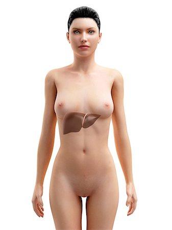 female nud - Healthy liver, artwork Stock Photo - Premium Royalty-Free, Code: 679-05798299