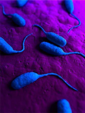 Bacteria, conceptual artwork Stock Photo - Premium Royalty-Free, Code: 679-05798338