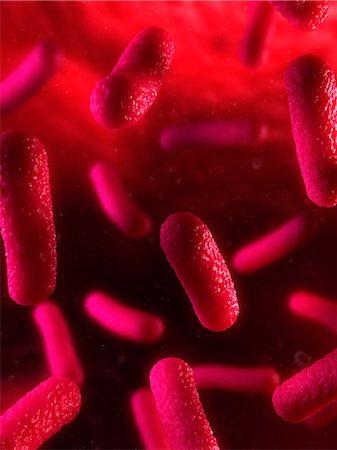 Bacteria, conceptual artwork Stock Photo - Premium Royalty-Free, Code: 679-05798340