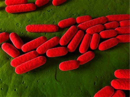 Bacillus subtilis bacteria, artwork Stock Photo - Premium Royalty-Free, Code: 679-05798365