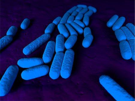 Bacillus subtilis bacteria, artwork Stock Photo - Premium Royalty-Free, Code: 679-05798367