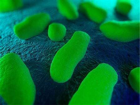 Bacteria, conceptual artwork Stock Photo - Premium Royalty-Free, Code: 679-05798382