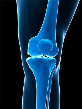 Knee bones, artwork Stock Photo - Premium Royalty-Free, Code: 679-05798418