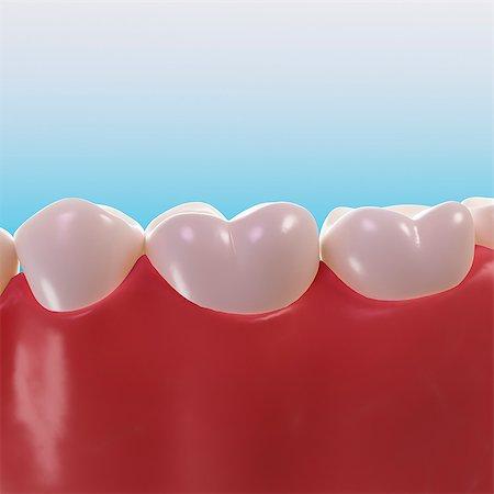 Healthy teeth, artwork Stock Photo - Premium Royalty-Free, Code: 679-05798422