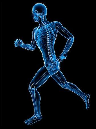 Running skeleton, artwork Stock Photo - Premium Royalty-Free, Code: 679-05798661