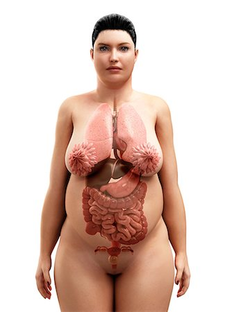 Obese woman's organs, artwork Stock Photo - Premium Royalty-Free, Code: 679-05798884