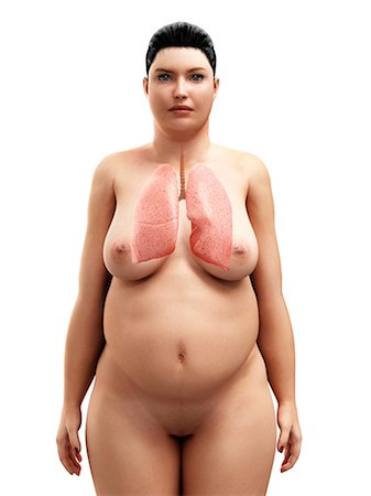 Obese womman's lungs, artwork Stock Photo - Premium Royalty-Free, Code: 679-05798885