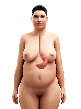 Obese woman's stomach, artwork Stock Photo - Premium Royalty-Free, Code: 679-05798888