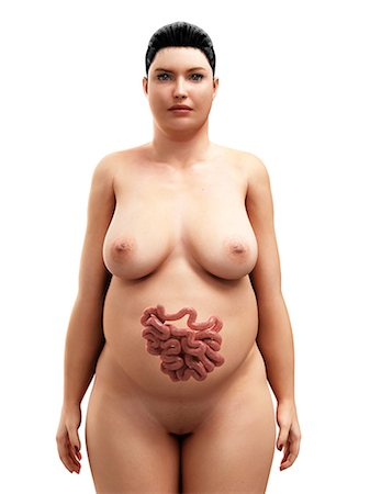 Obese woman's intestines, artwork Stock Photo - Premium Royalty-Free, Code: 679-05798890
