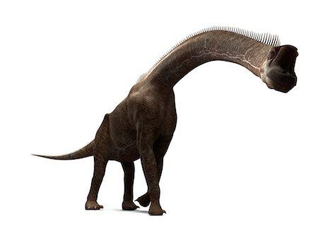 Brachiosaurus dinosaur, artwork Stock Photo - Premium Royalty-Free, Code: 679-05799000