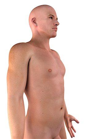 Male upper body, computer artwork. Stock Photo - Premium Royalty-Free, Code: 679-05995056