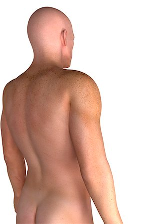 Male upper body, computer artwork. Stock Photo - Premium Royalty-Free, Code: 679-05995057