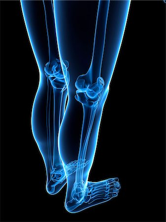 Leg bones, computer artwork. Stock Photo - Premium Royalty-Free, Code: 679-05995461