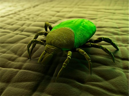 Tick (superfamily Ixodoidea) on human skin, computer artwork. Stock Photo - Premium Royalty-Free, Code: 679-05995589