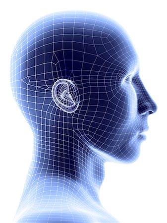 Human wireframe head, computer artwork. Stock Photo - Premium Royalty-Free, Code: 679-05996606