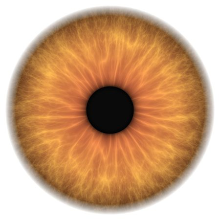 Brown eye. Computer artwork of a close-up of the iris and pupil of an eye. The iris, a coloured muscular ring, regulates the amount of light that enters the eye through the pupil (black). Stock Photo - Premium Royalty-Free, Code: 679-05996602