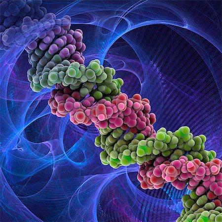 pair - DNA molecule. Molecular model of DNA (deoxyribonucleic acid). Stock Photo - Premium Royalty-Free, Code: 679-05992536