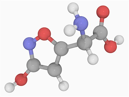 fungus - Ibotenic acid, molecular model. Naturally occurring neurotoxin and deliriant found in mushrooms. Atoms are represented as spheres and are colour-coded: carbon (grey), hydrogen (white), nitrogen (blue) and oxygen (red). Stock Photo - Premium Royalty-Free, Code: 679-05993745