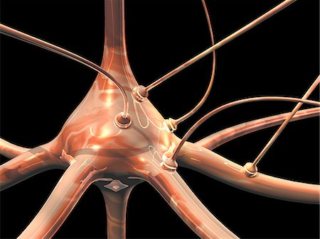 synapse - Neuron and synapses, computer artwork Stock Photo - Premium Royalty-Free, Code: 679-06198327