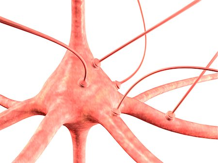 synapse - Neuron and synapses, computer artwork Stock Photo - Premium Royalty-Free, Code: 679-06198328