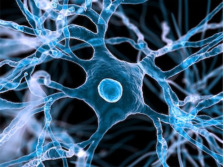 synapse - Nerve cells, computer artwork. Stock Photo - Premium Royalty-Free, Code: 679-06198841