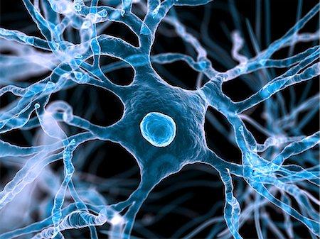 synapse - Nerve cells, computer artwork. Stock Photo - Premium Royalty-Free, Code: 679-06198841