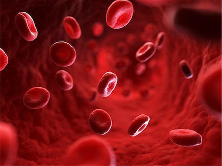 Red blood cells in a blood vessel, computer artwork. Stock Photo - Premium Royalty-Free, Code: 679-06198891