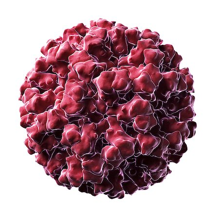 Norovirus (formerly Norwalk virus) particle, computer model. This virus is highly contagious in humans causing vomiting and diarrhoea. Stock Photo - Premium Royalty-Free, Code: 679-06198983