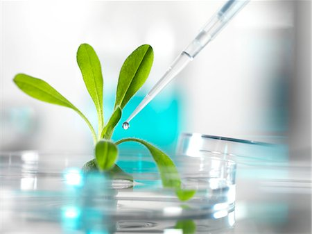 Plant research, conceptual image. Stock Photo - Premium Royalty-Free, Code: 679-06199083