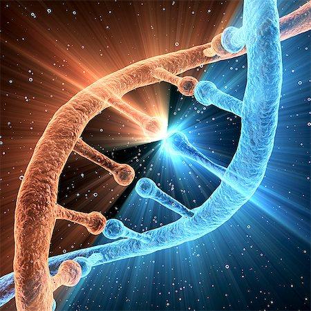 spiral - DNA molecule, computer artwork. Stock Photo - Premium Royalty-Free, Code: 679-06199184