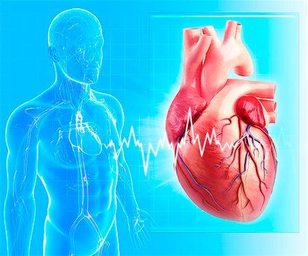 Human heart, computer artwork. Stock Photo - Premium Royalty-Free, Code: 679-06674605