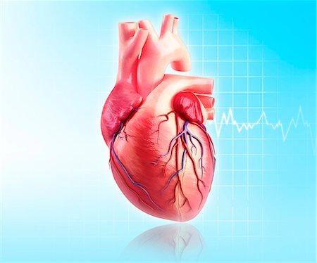 Human heart, computer artwork. Stock Photo - Premium Royalty-Free, Code: 679-06674607